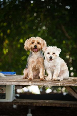 Village Animal Clinic - North Palm Beach, FL - Doggie Care Juno Beach, Jupiter, West Palm Beach, Riviera Beach, Singer Island, Lake Park since 1966