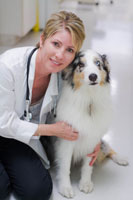 Dr. Melisa Degen DVM ACVIM Board Certified Small Animal Medicine Specialist Veterinarian for Dogs and Cats in North Palm Beach, Palm Beach Gardens, Lake Park, Juno Beach, Jupiter, Riviera Beach. Singer Island, West Palm Beach, Palm Beach